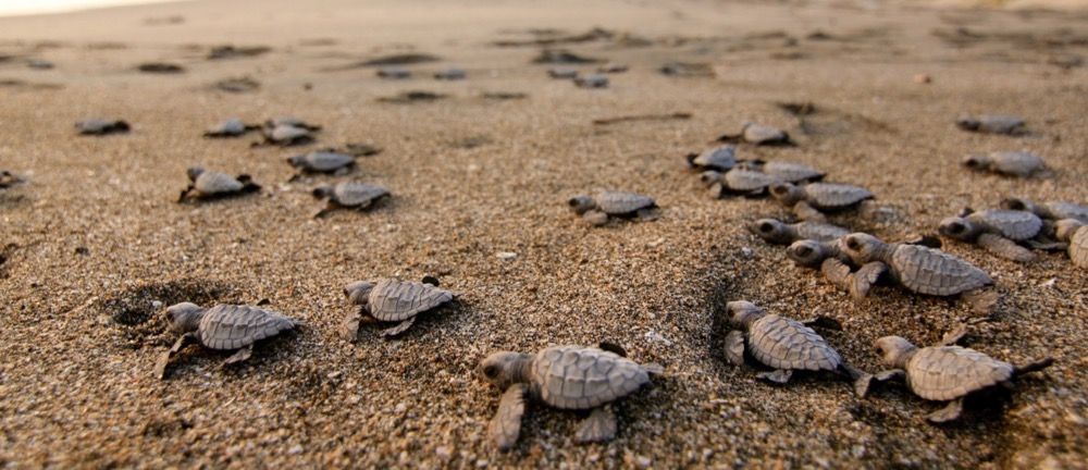 sea turtle conservation, surf with amigas